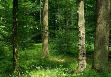 Ovaro, boscaiolo precipita per 30 metri e perde la vita