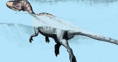 Alla scoperta delle piste fossili di Forni Avoltri, e si svelerà una rarità