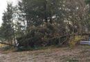 Maltempo: Bolzonello e Marsilio (Pd) incontrano gli operatori del comparto boschivo