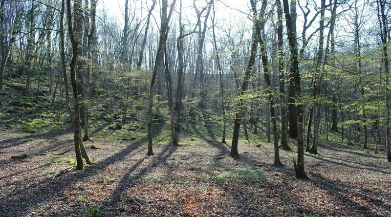 A Tarcento un'escursione alla scoperta delle piante spontanee