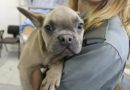 Fermato a Palmanova un trasporto di 33 cuccioli di cani e gatti provenienti dalla Slovacchia