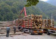 Il bosco digitale è più utile e sostenibile